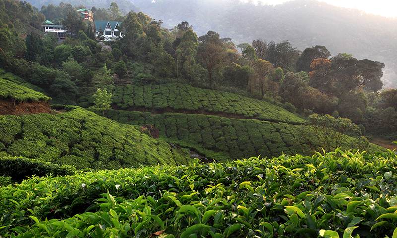 Best Resort in Munnar For Honeymoon , Luxury Resort In Munnar